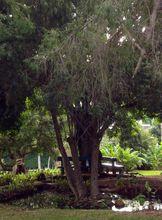 balfour-garden-beau-bassin-cities-mauritius