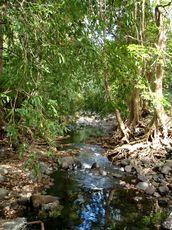 fauna-black-river-national-park-mauritius