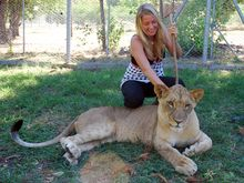 stroke-a-lion-casela-nature-and-leisure-park1