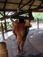 sugarcane-mill-domaine-les-pailles-places-to-visit-mauritius