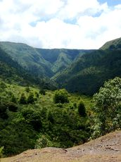 valley-black-river-national-park-mauritius