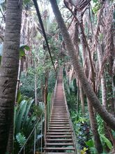 wobbly-plank-bridge-chamarel-parc-aventure-mauritius