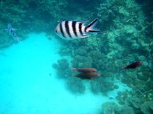 fishes-blue-bay-beaches-mauritius